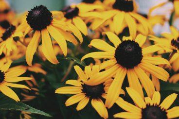 Perennials for Fall Color
